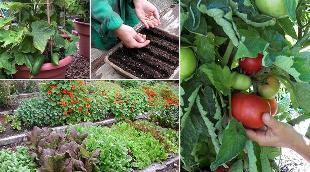 the-best-vegetable-gardening-tips-for-beginners